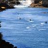 <b>Fishing below Willamette Falls </b><br>Oregon City, Oregon <br> <i> </i>