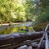 Clackamas River, Oak Grove Branch<br /> Ripplebrook campground