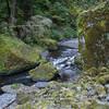<b>Tanner Creek near Wahclella Falls </b><br>Columbia River Gorge <br><i>October 12, 2008</i>