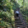 <b>Stairway in the Woods </b><br>Tanner Creek Trail near Wahclella Falls </b><br>Columbia River Gorge <br><i>October 12, 2008</i>