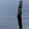 4.30.12  <b>Seagull on a Piling</b>