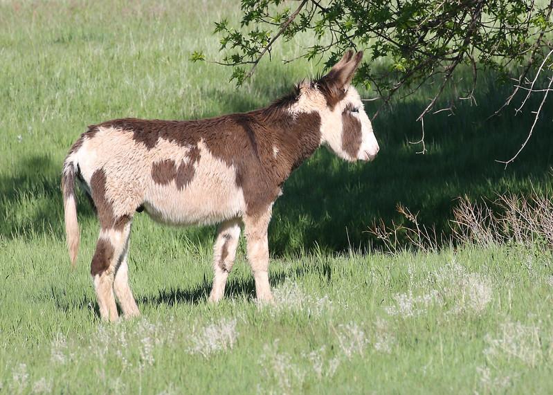 Burrow, Custard State Park