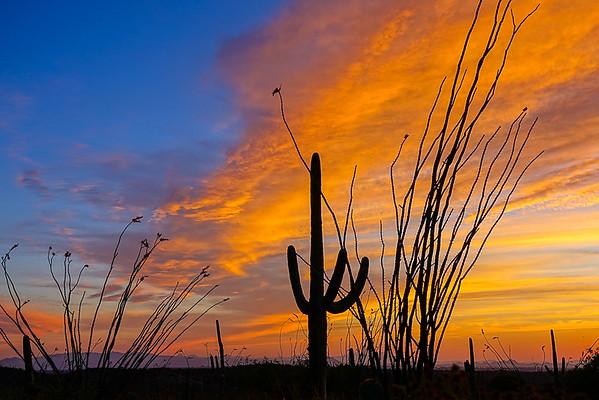 Saguaro NP, Arizona
