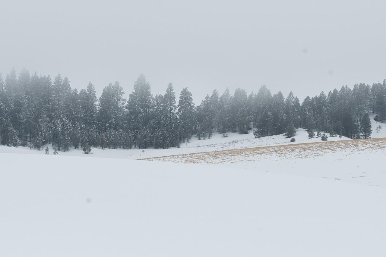 Palouse (winter to spring)