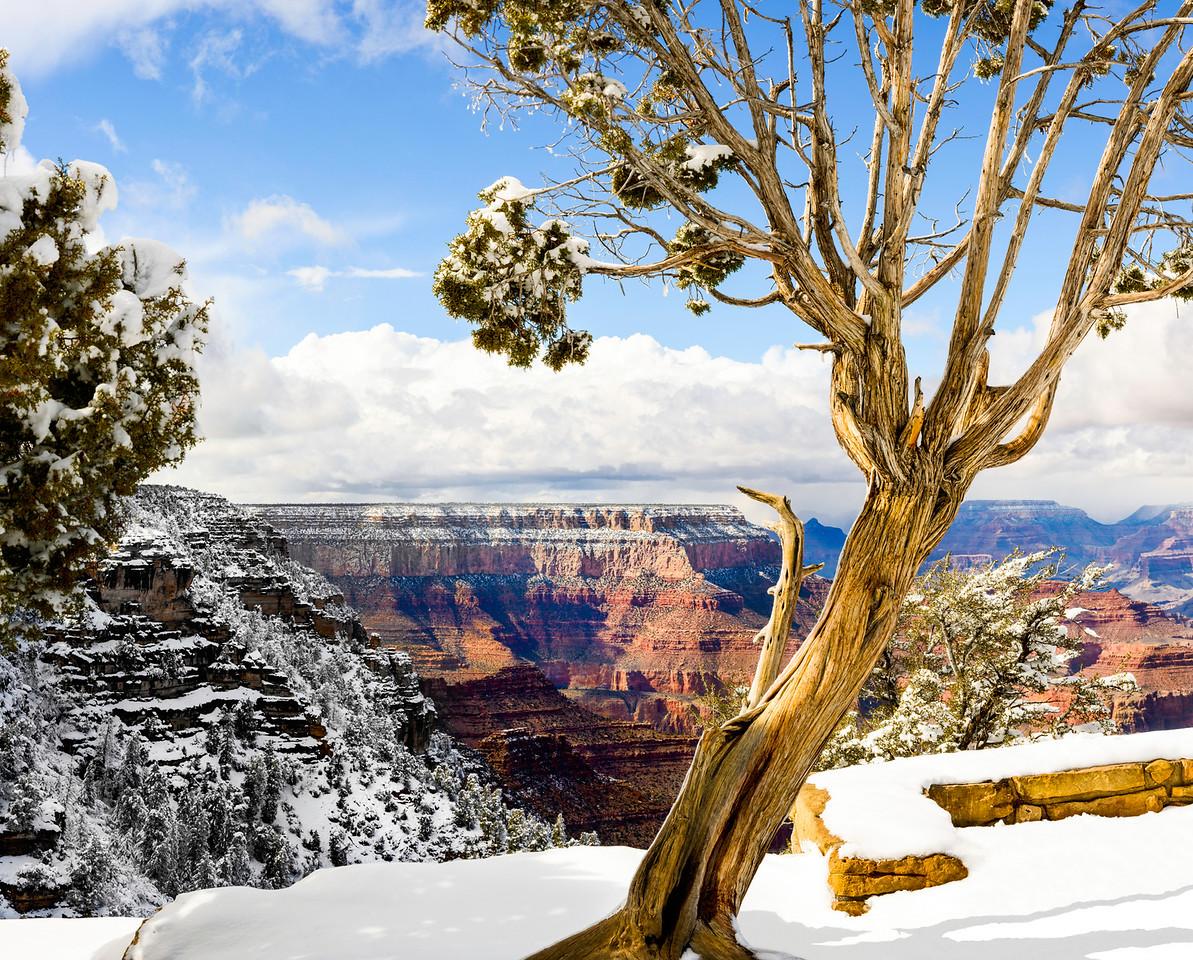 Tree overlooking the Grand Canyon, Arizona