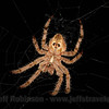 A spider by my front door (6/22/2016)<br /> EF100mm f/2.8L Macro IS USM @ 100mm f11 1/160s ISO100