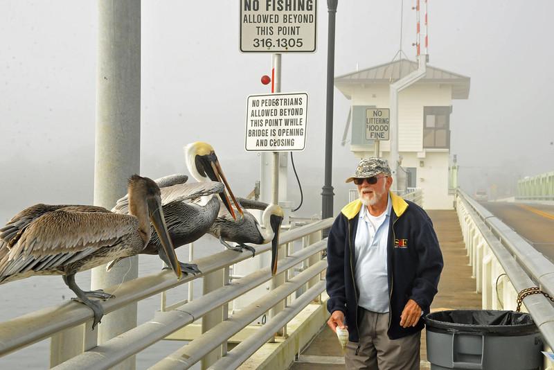 A. Mike Miller feeding Pelicans<br /> Mathers Bridge<br /> Indian Harbor Beach, Florida<br /> 174-2364a