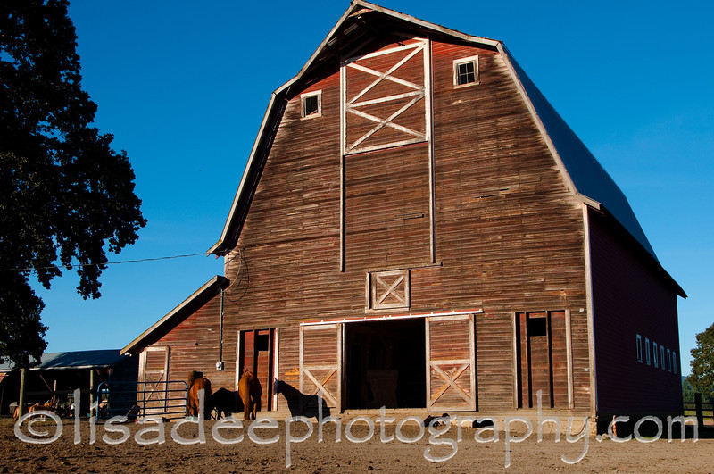 Barn and horses in Corvallis, Oregon<br /> Bellfountain Rd