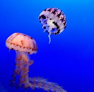 Monterey Aquarium & Cannery Row-9/14/18