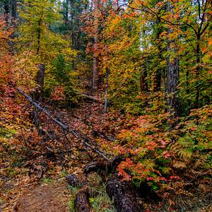 Fall colors along the West Fork of Oak Creek