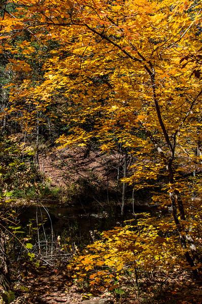 Sedona/Oak Creek