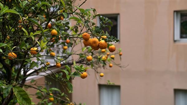 Orange Fruit - Cap D'Ail 2018