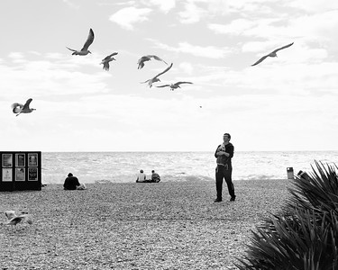 Feeding Gulls on Brighton Beach