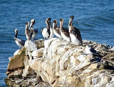 Pelican Rock-Santa Cruz, Ca-1/31/17