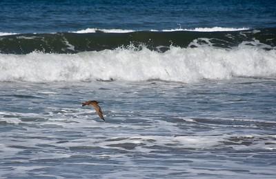 Rio Del Mar, Aptos--5/10/18