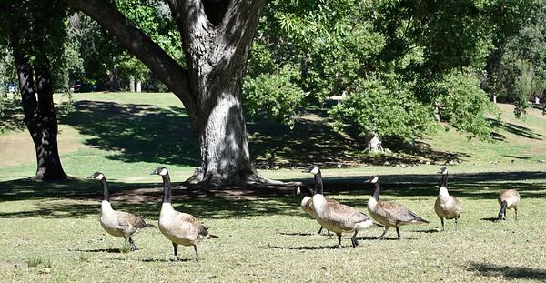 Vasona Creek Park-7/16/16