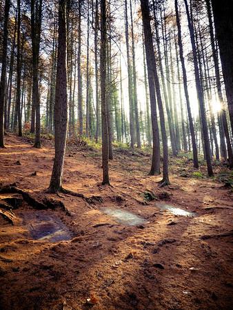 #1 Dead Wood/Bois Mort