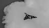 JD2A0591  Avro Vulcan XH558