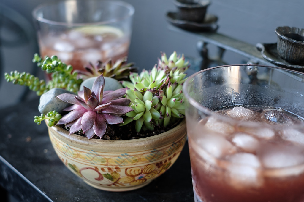 Succulents and cocktails | Seattle, WA | April 2018