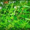 butterfly garden...Hammock Park...2020-08-04
