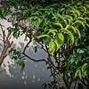 Butterfly World,Coconut Creek, Fl 2021-01-21 m12 12x40