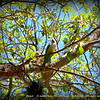 "Parrot     ©  <a href=""http://www.PhotosRUs2008.com"">http://www.PhotosRUs2008.com</a>   Bob Lester   All rights reserved."
