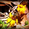 "Busy Bee    ©  <a href=""http://www.PhotosRUs2008.com"">http://www.PhotosRUs2008.com</a>   Bob Lester   All rights reserved."