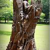 2014-06-16_IMG_1986_Largo Central Park,Largo,Fl _