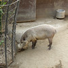 I can hear you now:  isn't a warthog a bit off-topic?<br /> <br /> No!  As far as I am concerned, warthogs are ALWAYS on topic.