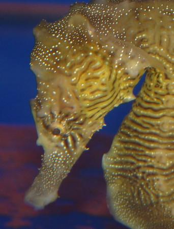 Birch Aquarium, 5-12-2011