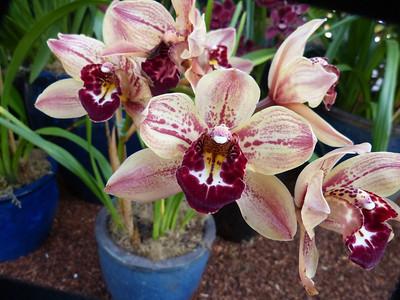Botanical Garden, Balboa Park, 2-6-13