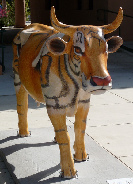 "hmmmm, could it be a ""tiger"" cow?"