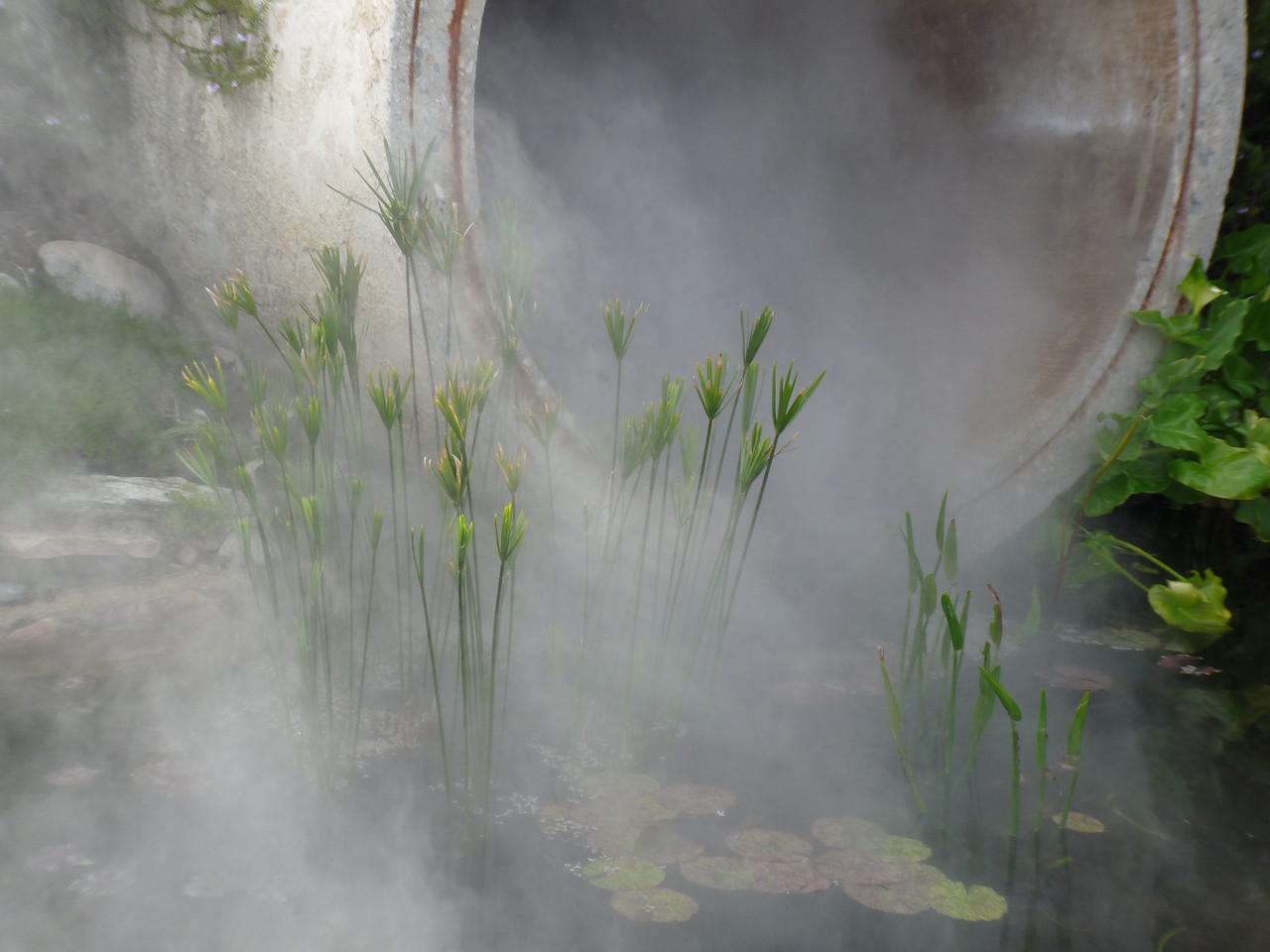 a misty pond