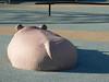 hippos are round, eh?