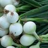 Nice little onions.  Boring, but nice.
