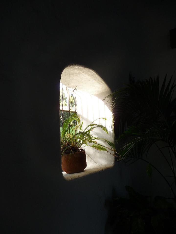 a sad little plant in an arched window