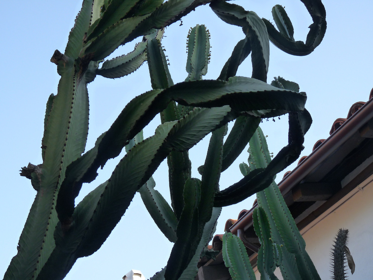 just an interesting tangle of cacti