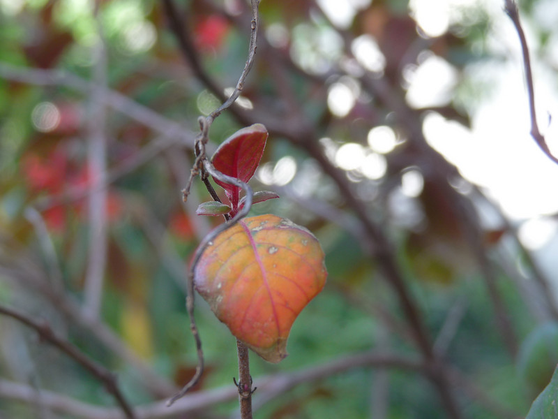I just like this shot of a sort-of heart-shaped leaf