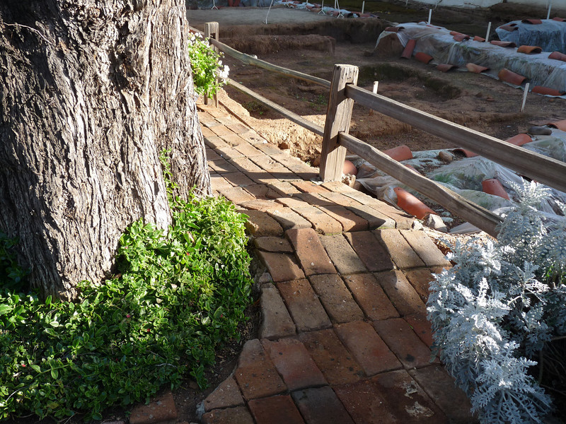 """a very old tree upsets the adobe sidewalk next to an excavation of """"nichos"""", which are not cheese covered tortilla chips, but rather little alcoves or bedrooms (ie, niches).  [either that, or some wading pools are being installed]"""