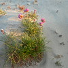 Just not used to seeing stuff growing at the beach