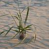 some kinda back-east-type marsh grass