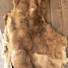 another ratty animal skin