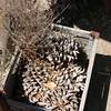 box o' pine cones