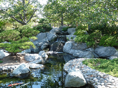 Tranquility at the Japanese Tea Garden