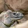 Cotswold Wildlife Park 23-06-15  0015