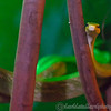Cotswold Wildlife Park 23-06-15  0016