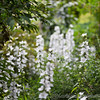 Cotswold Wildlife Park 23-06-15  0003