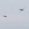 Daks over Duxford 05-06-19 0286