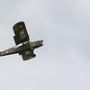 Daks over Duxford 05-06-19 0164