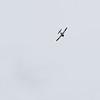 Daks over Duxford 05-06-19 0205